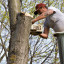 Tree Pruning – Essential Tips To Make Scenarios Better