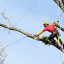 Tree Pruning: Why should you do it?