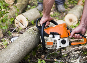 Reasons You Too May Need the Service of Tree Removal Company