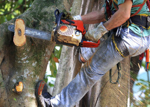 Helpful Tips for Removing a Tree Stump